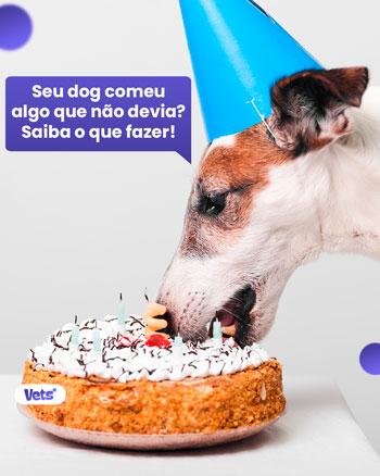 comida que seu cachorro não pode comer