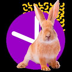 coelho simpático