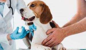 Vacina V10 cachorro
