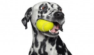 Enriquecimento ambiental para cachorro Vets