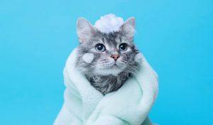 Como dar banho em gato e cachorro em casa?