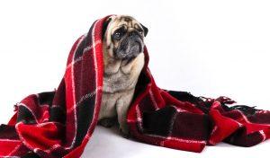 Dicas de cuidados para os pets no inverno
